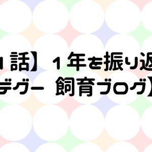 【31話】1年を振り返って【デグー 飼育ブログ】