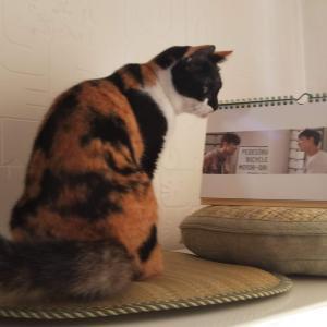 飼い猫ルゥと東方神起カレンダーのツーショット☆可愛いよ~