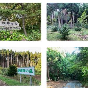 奥尻島って森も豊か