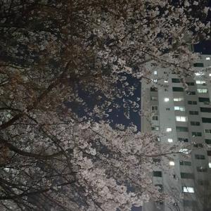 悲しい訃報(TДT)。でも負けない!勇気が出る、艶やかなソウルの夜桜が届いたよ(///∇///)