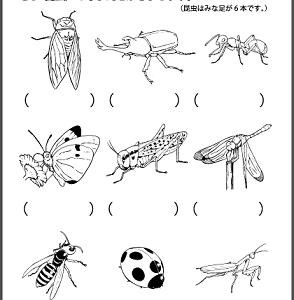 第94回🍃 しぜん② 昆虫・その他の生き物編