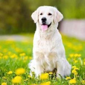 外飼いの犬について