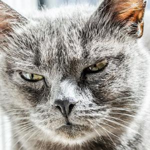 怒りの対処法、憤死しそうになったら!