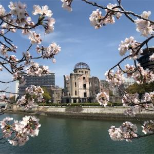 【広島平和記念公園】桜満開★原爆ドームまでの川沿をお花見★2021年3月26日【世界遺産】