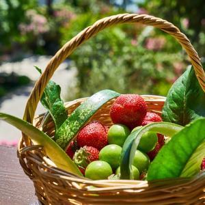家庭菜園の夏野菜たち|意外な長持ち保存方法
