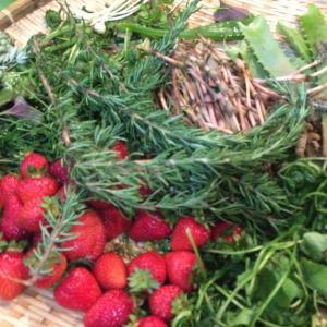 初めての家庭菜園|おすすめ野菜から1種類を選んだ理由