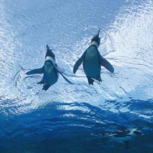夏デートにオススメ❤️涼しい〜癒しスポット「サンシャイン水族館」