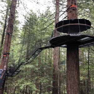 『Redwoods Tree walk』は木々の力強さを感じる場所