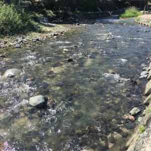 四連休の過ごし方②:川遊びにお刺身に