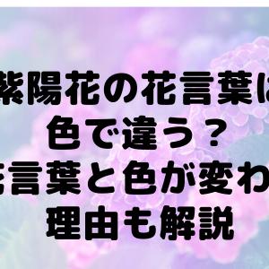 紫陽花の花言葉は色で違う?花言葉と色が変わる理由も解説