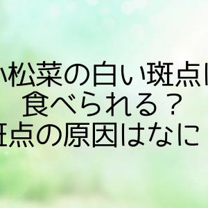 小松菜の白い斑点は食べられる?斑点の原因はなに?