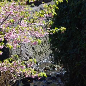 名前を知らない満開の桜・・・Michael Hedges