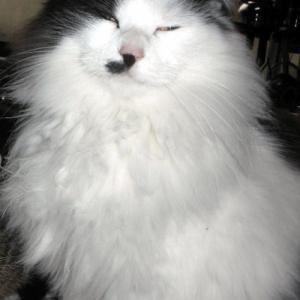 猫の皿・・・Cat Stevens
