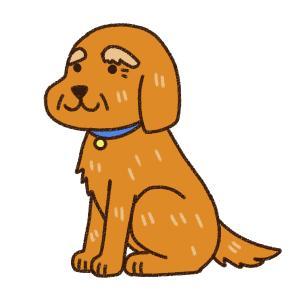 ペット 介護 ペットベリー 老犬 生活