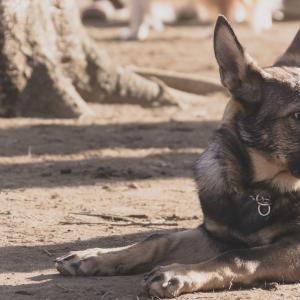 狂犬病大国のインドで犬に噛まれた!そのままパキスタンへ。