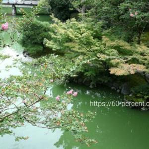 京都の庭園で癒される|旧九條家庭園(拾翠亭)で、はんなり