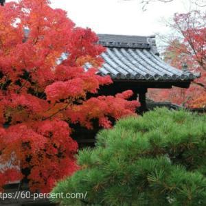 京都の庭園で癒される【天授庵】迫りくる紅葉と降るような紅葉