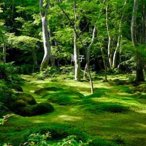 京都の寺院【祇王寺】泣ける。平清盛に捨てられた白拍子の物語