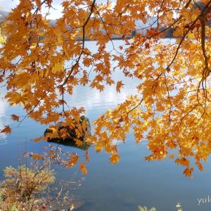 11/3、11/4のお山の紅葉。。。