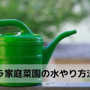 【ズボラ家庭菜園】水やりを減らして野菜も元気になる方法