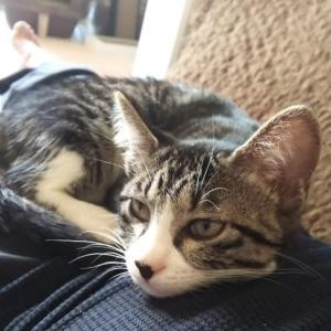 はぎたま日記番外編:もっと筋トレの負荷上げなきゃ猫のベッドになっちゃうかも…