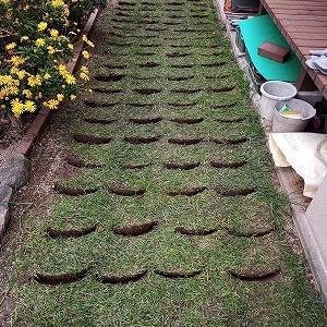 芝、冬野菜種まき