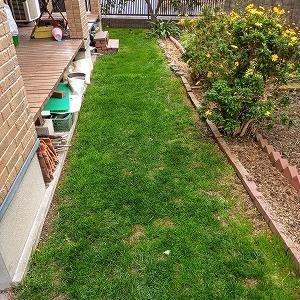 一ヶ月ぶりの芝刈り、カツオ菜移植