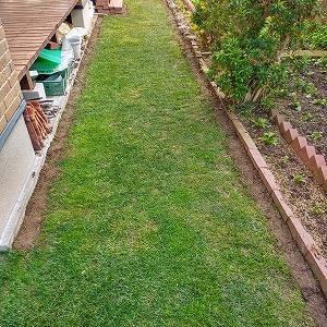 寒波の前に芝刈り、カツオ菜移植