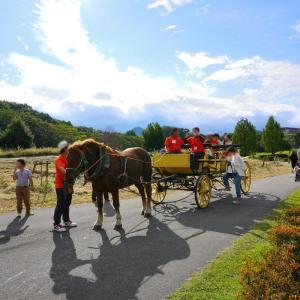 【寄稿記事紹介】日本一のやまがた馬まつり