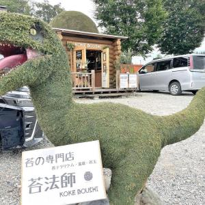【新店レポ】苔法師(こけぼうし)(山形市)|山形県内初の苔専門店がオープン!