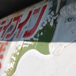 玉名市うまかもん探訪 … 玉名平野から雲の上の普賢岳を望む