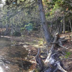 「秋のオンネトー」五色沼と呼ばれる神秘の湖です。(^_^)v