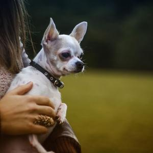 犬に愛情を与えるタイミングが大切!そのタイミングとは?