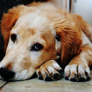 ペットショップで売れ残った犬と触れ合ってみました!
