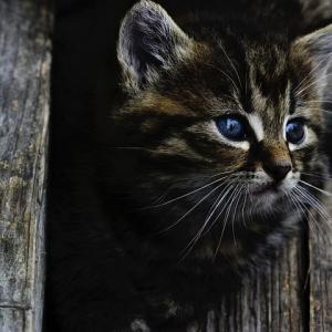 猫ブームはなぜ起きた?その裏側では………