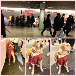 盲導犬応援祭♪ありがとうございました