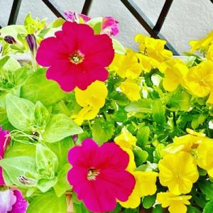 苺と庭の花