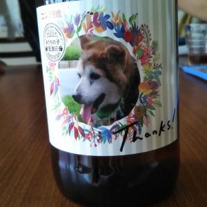 19歳、記念のビール・・・