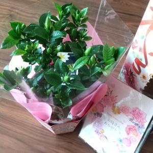 「母の日」に、ありがとう~・・・