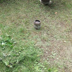 2日間、少しづつ庭の草刈り始めました・・・