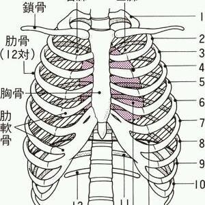 肋骨を露骨に触る