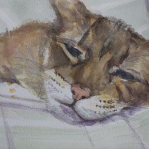 眠くてたまらない!うちの猫を描く