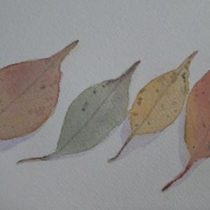 ソメイヨシノの落ち葉