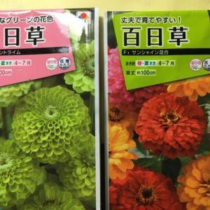 花のタネまき