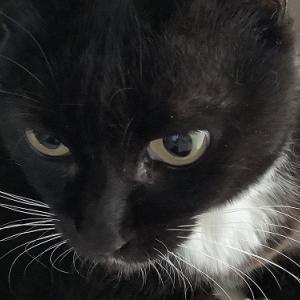 家猫|風邪が治らず動物病院へGO!