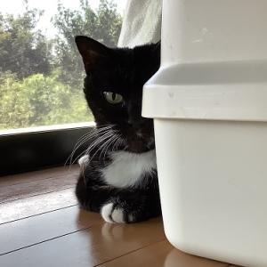 家猫|夏の朝のルーティーン
