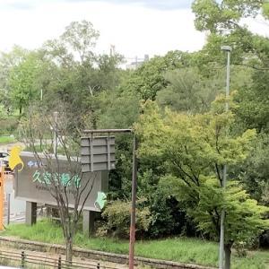 公園ぶらぶら|久宝寺緑地 整備されていて綺麗な公園でした