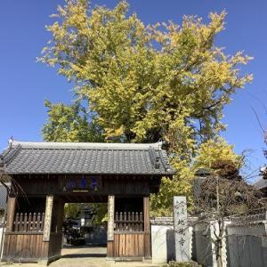 地蔵寺の銀杏