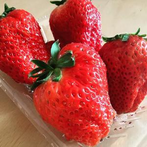 イチゴ農家さんでイチゴを買う