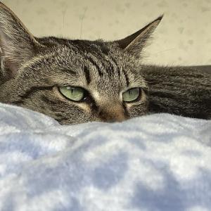 猫が凝視する先には